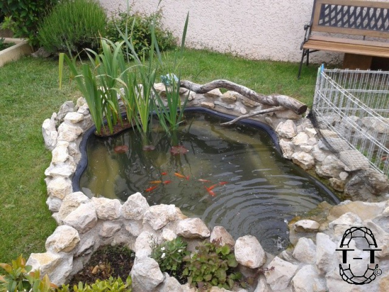 bassin preforme tortue