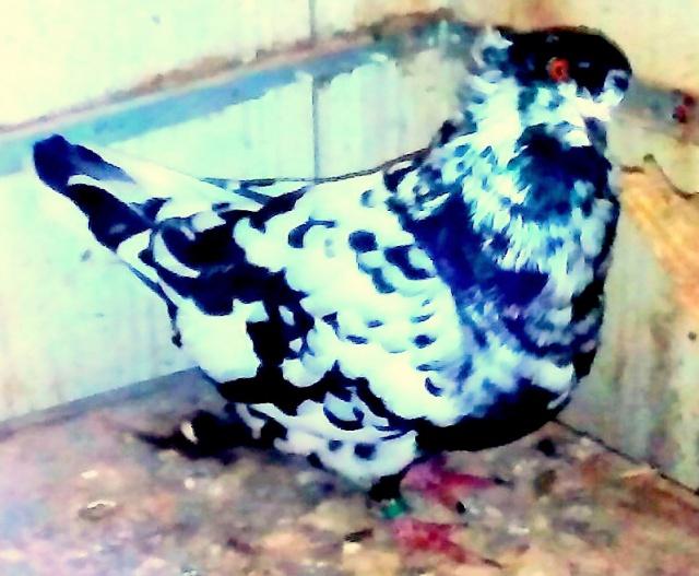 L'élevage alexandre girard. 690846IMG20141101133512