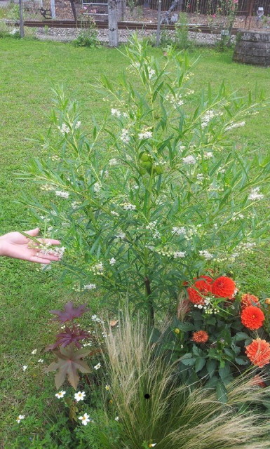 plante dans un massif communal 691260inconnu2