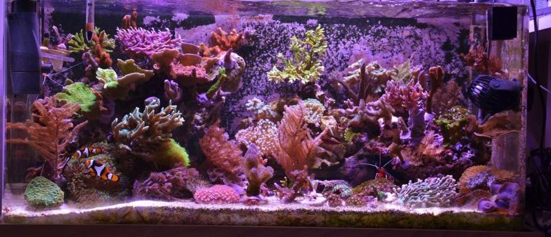 Mon premier aquarium eau de mer - Page 5 69165820150825
