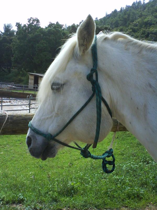 Une tumeur à la ganache a emporté mon cheval Banco. Qui a déjà vu ça ? 692591DSC00033