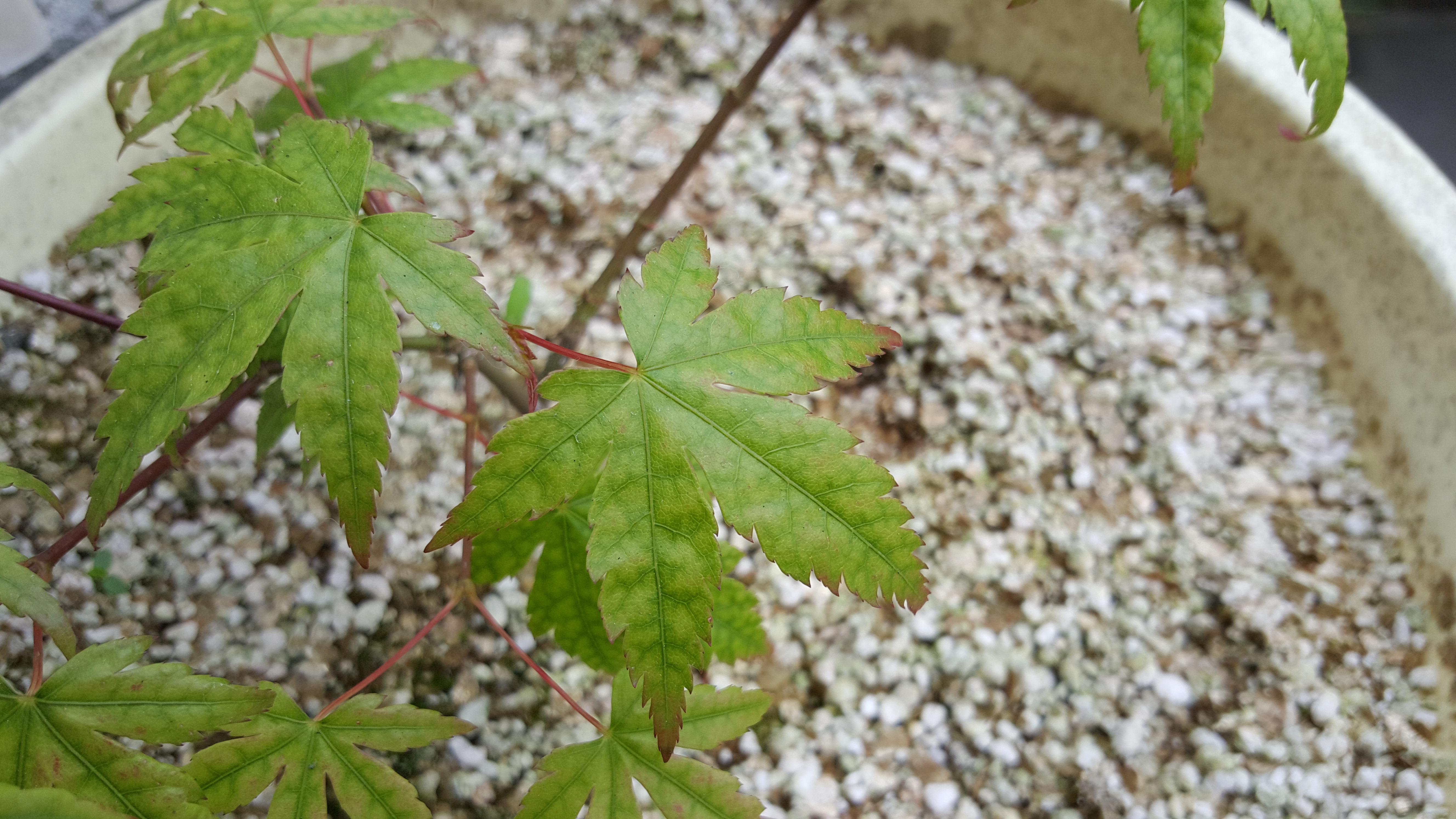 le bassin floral d'été de mes anodonte et moules naine - Page 6 69460020160619131322