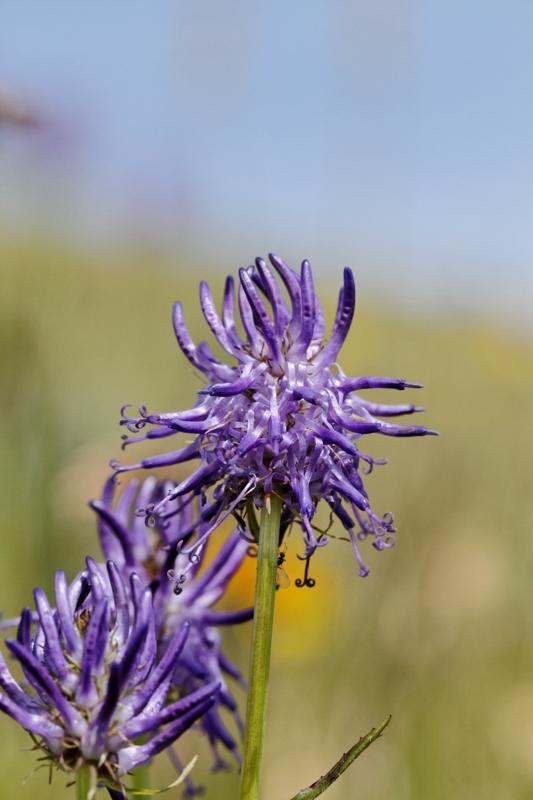 Flore et insectes de Vanoise 695157LelacBlanc048DxO800x600