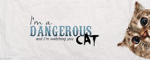 La galerie nyan nyan de Cy-chan !  - Page 2 697217Dangerouscat