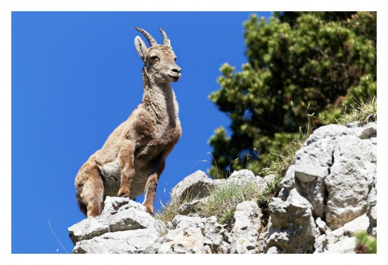 La faune du Pas de l'Aiguille 700775FJ8I4266DXO
