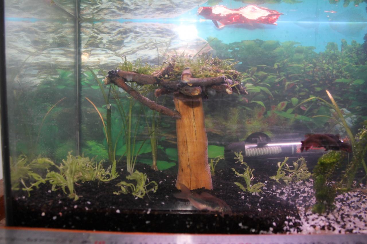 aquarium des femelles déco nature 701766aquarium002