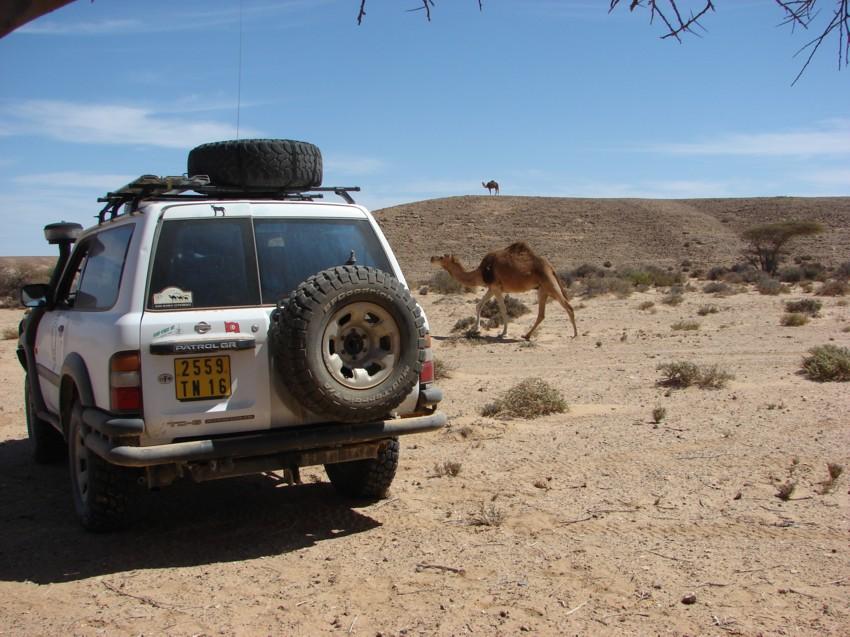 Le Grand Sud du Maroc - II 702487037