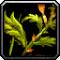 Les vertus des plantes, tome II : Compagnon 705085Invmischerb01