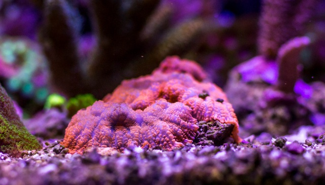 Mon premier aquarium eau de mer - Page 6 711986DSC0483