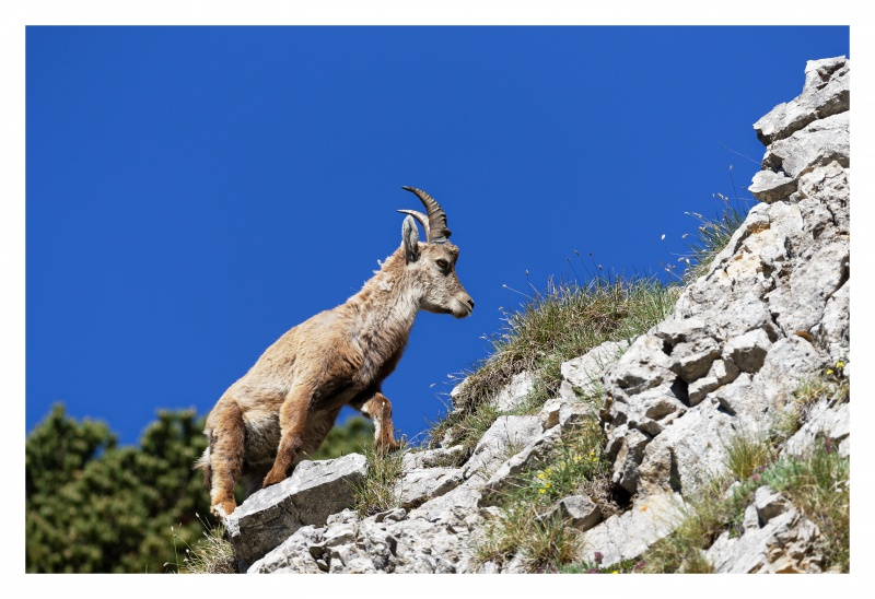 La faune du Pas de l'Aiguille 712431FJ8I4277DXO