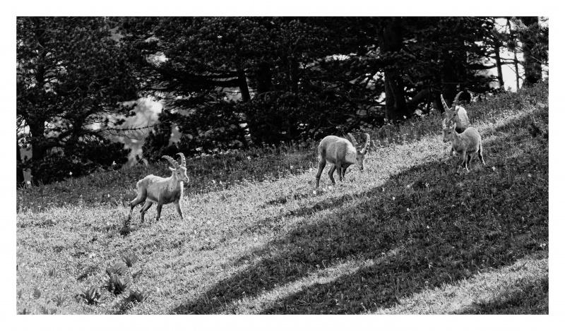 La faune du Pas de l'Aiguille 713286FJ8I4308web