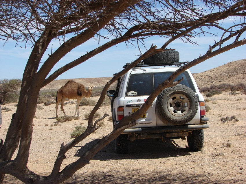 Le Grand Sud du Maroc - II 713379038