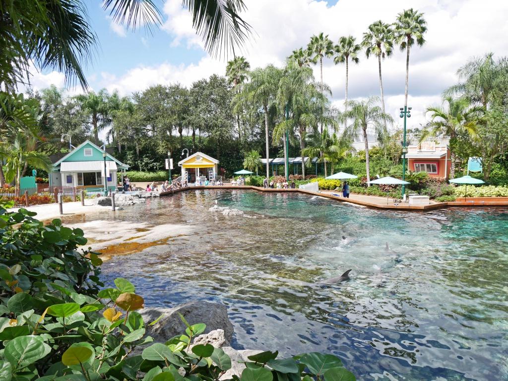 Une lune de miel à Orlando, septembre/octobre 2015 [WDW - Universal Resort - Seaworld Resort] - Page 9 713758P1060348
