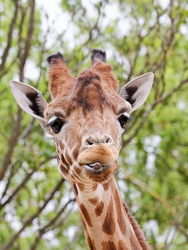 Zoo de Romanèche Thorens 717968Bourgognemai2012095DxOVerticale800x600
