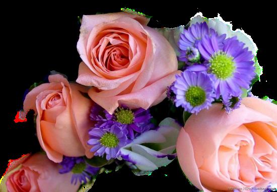Tubes roses 719837Gibsonvj