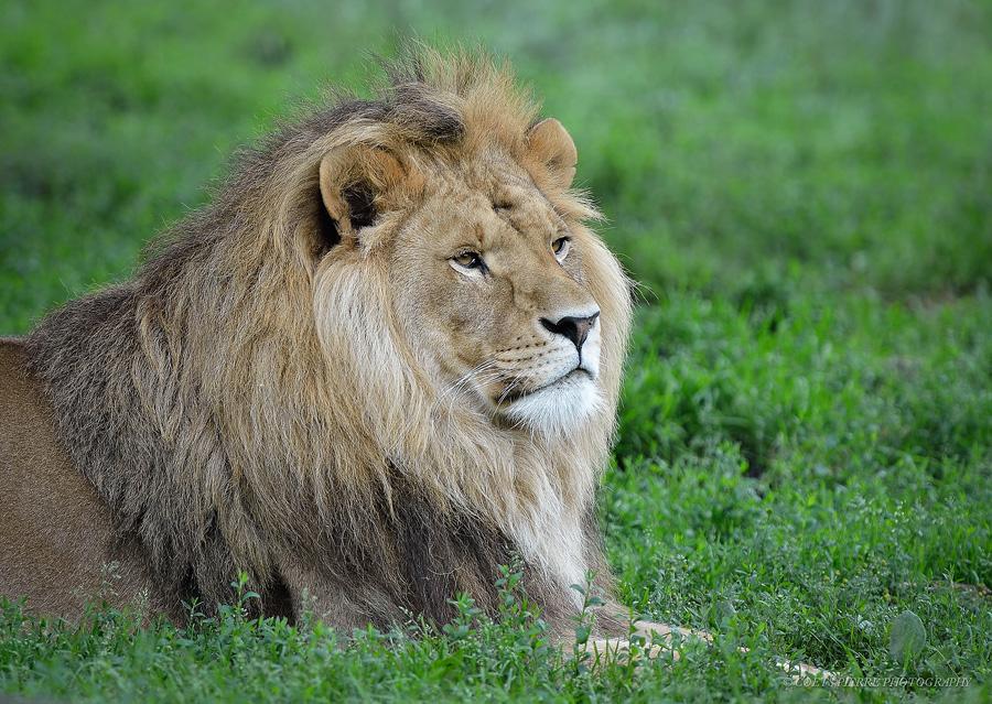 Sortie au Zoo d'Olmen (à côté de Hasselt) le samedi 14 juillet : Les photos - Page 2 720411D4D2714
