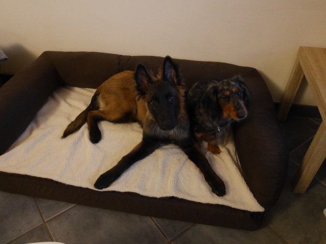 Chienne arthrosique : quel couchage ? - Page 2 720973381