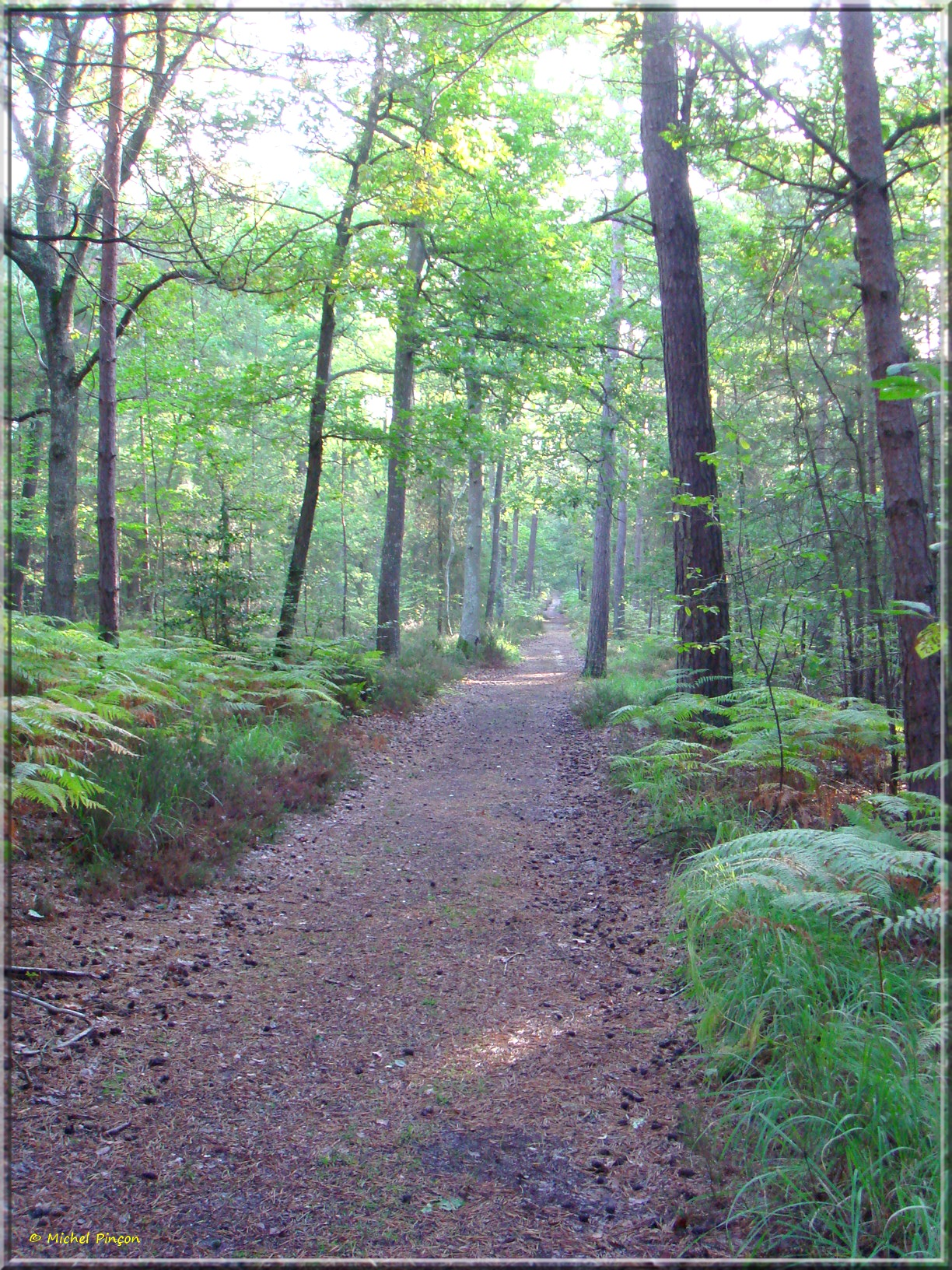 [fil ouvert] la forêt dans tous ses états - Page 15 721535DSC013796
