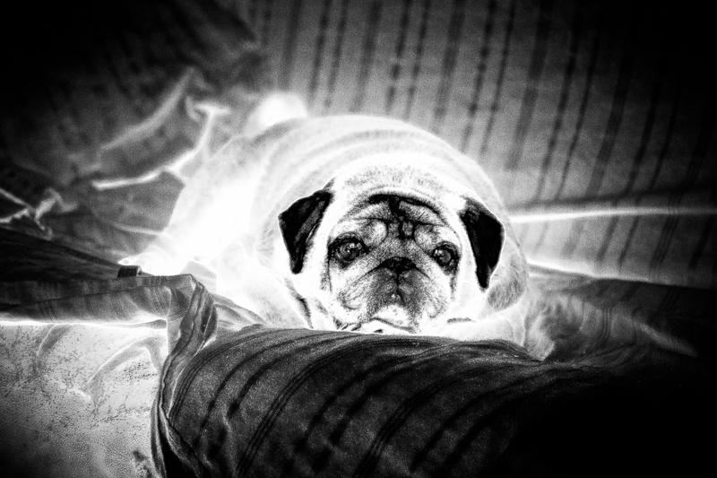 Aieeee!  wanna be your radio actif... dog !  721643boulette1