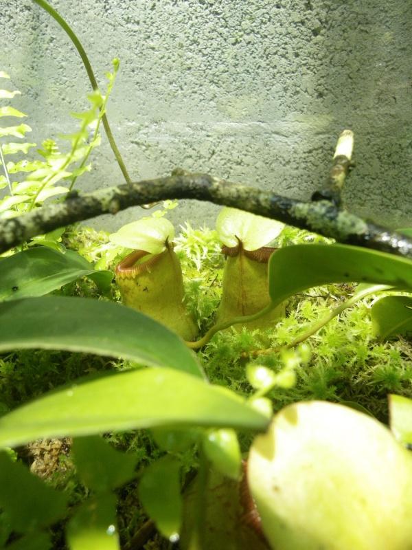 Mon terrarium highland 726094IMGP1846