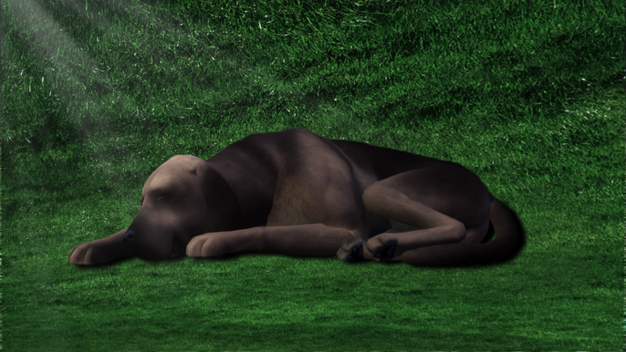 Je veux un Sims 726446Dodo