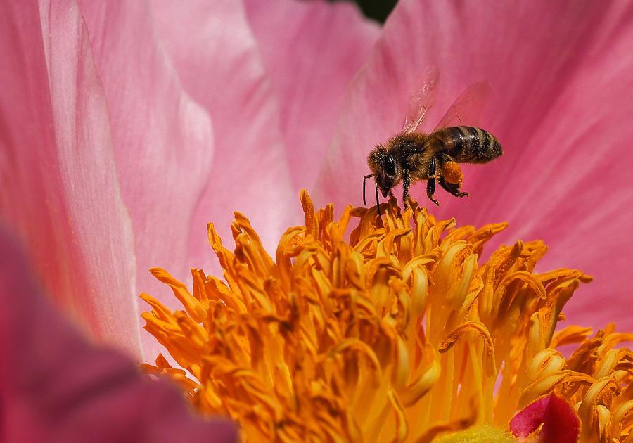 petites abeilles / test OM10 727605O040329