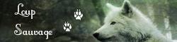 Loup Sauvage 728379imgtopsite