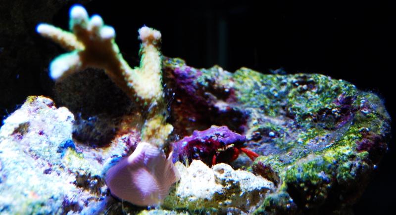 Nano Reef 30l 729773Sanstitre34