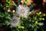 Partie Guérisseur : Les plantes de la Forêt 736739snon