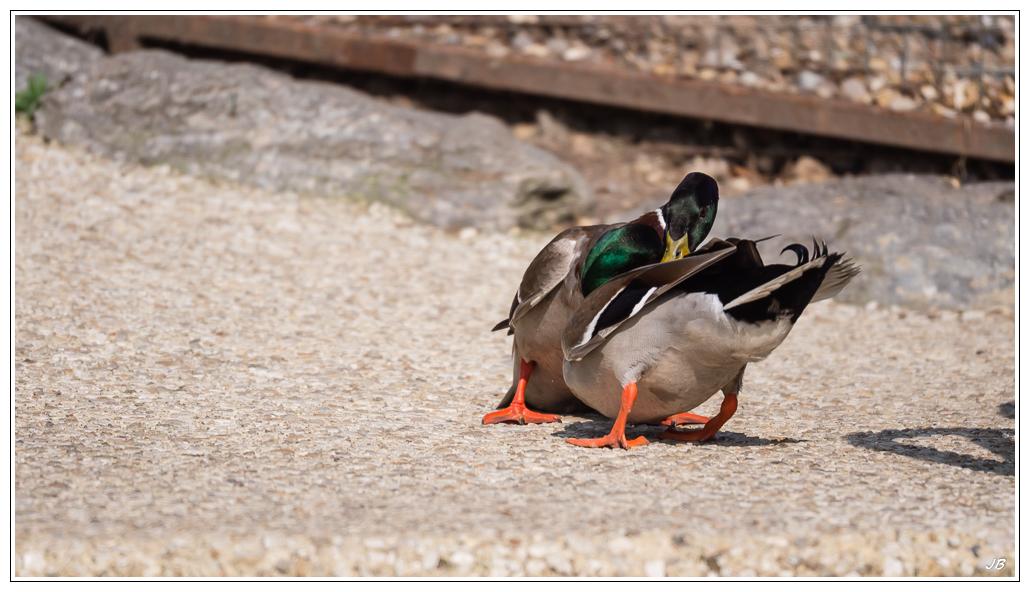 Zoo de Beauval : les oiseaux 739247LR53P3130286