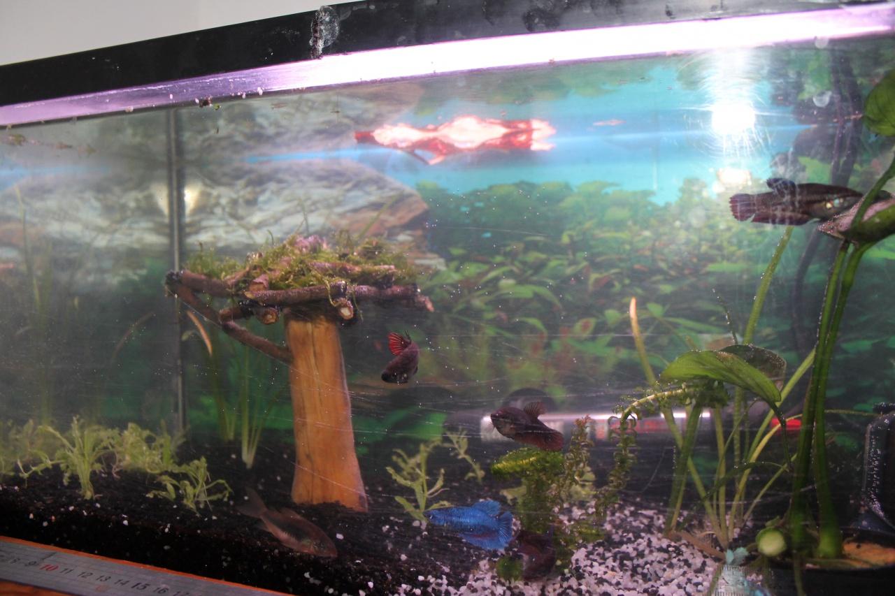 aquarium des femelles déco nature 740647aquarium001