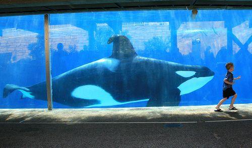 [Photos] Orques aux vitres 744002ulises43