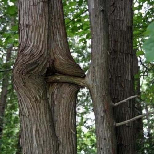 Comment se reproduisent les arbres? (classé X) 747983ATT00003