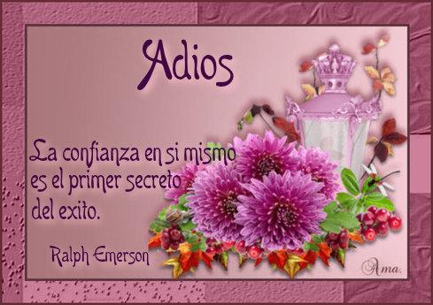 Flores con Frase 748470adios