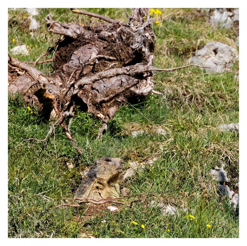 La faune du Pas de l'Aiguille 749347FJ8I4261DXO
