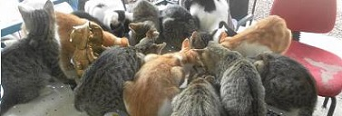 Coin des chats