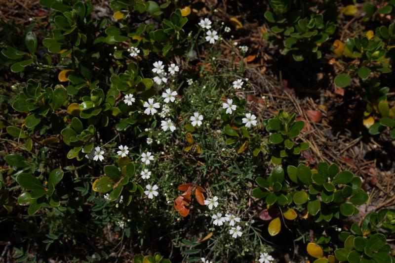 pas de carni mais de jolies plantes alpines ! 758211DSC03391