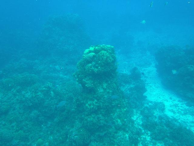 Petit voyage à Cozumel 758318cozumel010