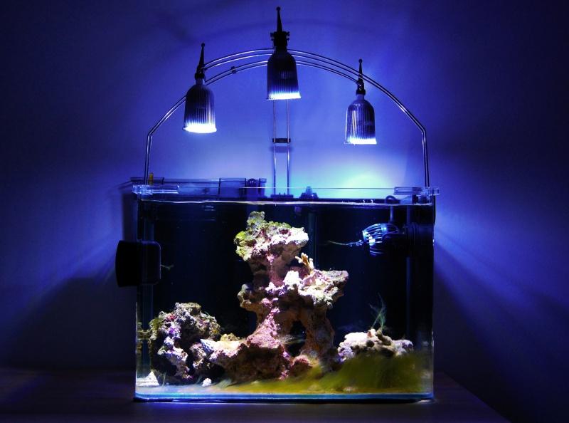 Nano Reef 30l 758953Sanstitre12
