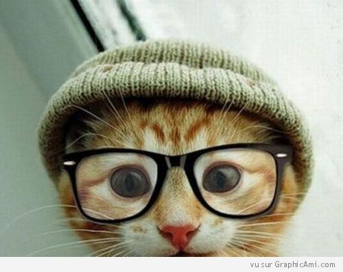 Chat avec des lunettes (new = chat avec des lunettes + un bonnet voir com de bils) 759481chatbonnetlunettes500x397
