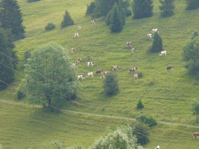Quelques photos prises dans Le Doubs 759713P1080011