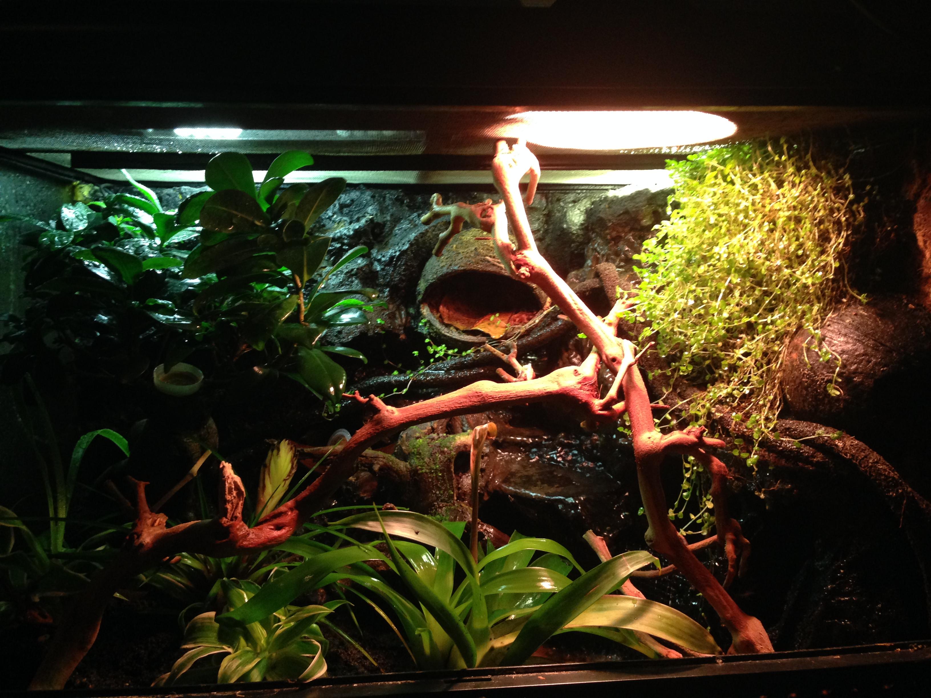 terrarium arboricole