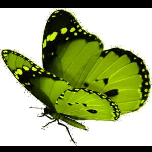 Tubes Papillon 764168Melgibson4ge2