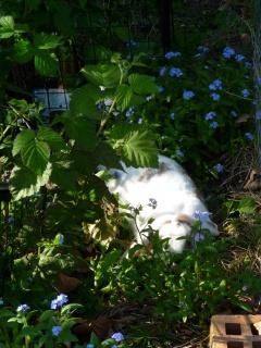 Nina, lapine bélier, née en aout 2011 - Page 8 770473P1160686