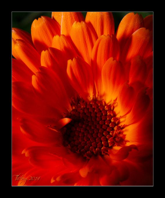 [Fil ouvert] Fleurs et plantes 771477fleur5