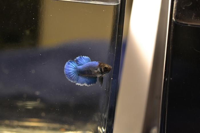 F3 - Lignée VL bleu HM/DT - Page 2 772541DSC0147