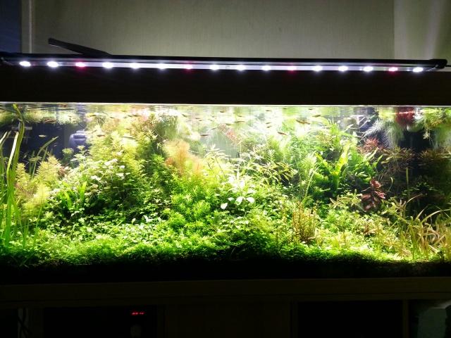 Mes (plus) de 60 plantes dans mon 240 litres - Page 3 77313520140215085629