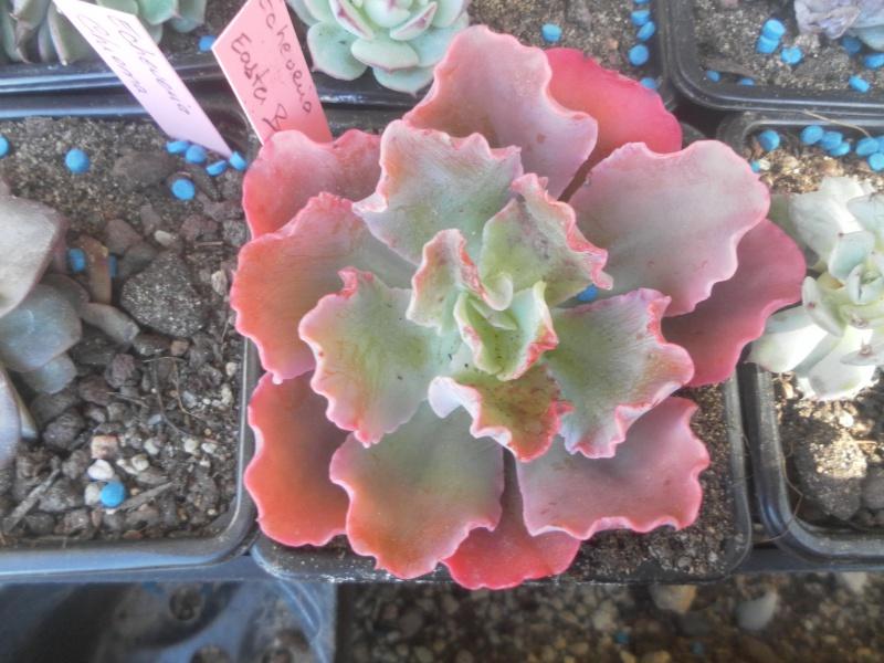 les plantes de syljou - Page 3 775861SAM4893