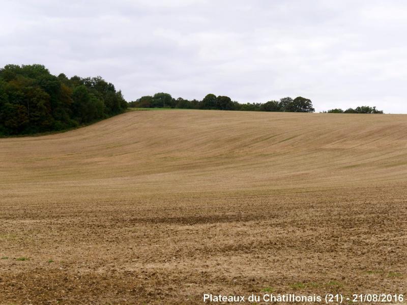 Grandes cultures en France 779576Plateau3