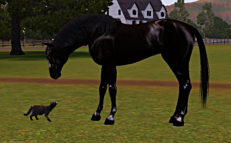 "[Challenge] Teens and Horses ""Sims 3"" - Page 3 779606polkarencontre2"
